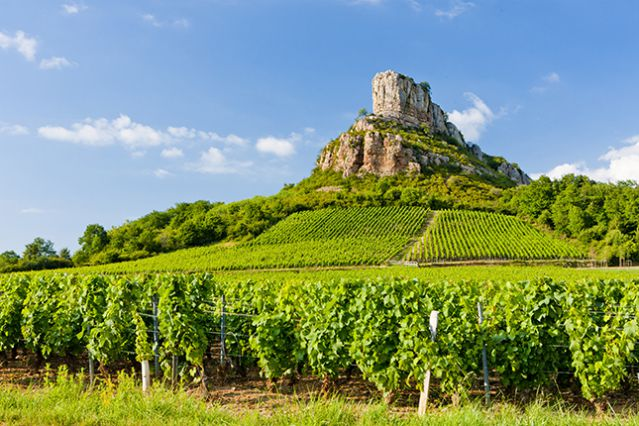 The rock of Solutré, coral reefs and exceptional Chardonnay